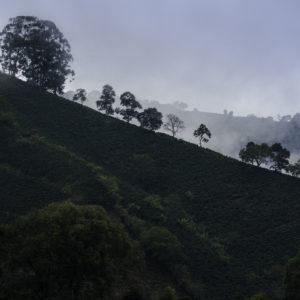 coffee-hillside-1-of-1